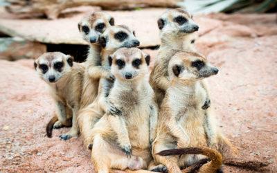 Safari con niños en Sudáfrica