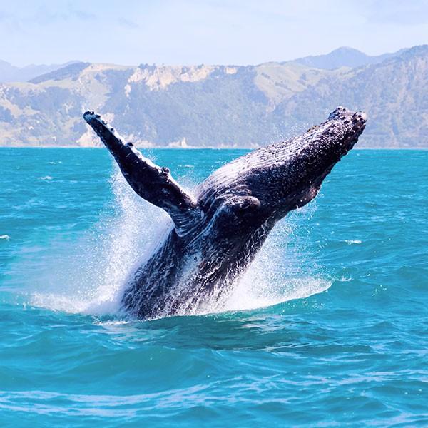 Avistamiento de ballenas en Este de Canadá