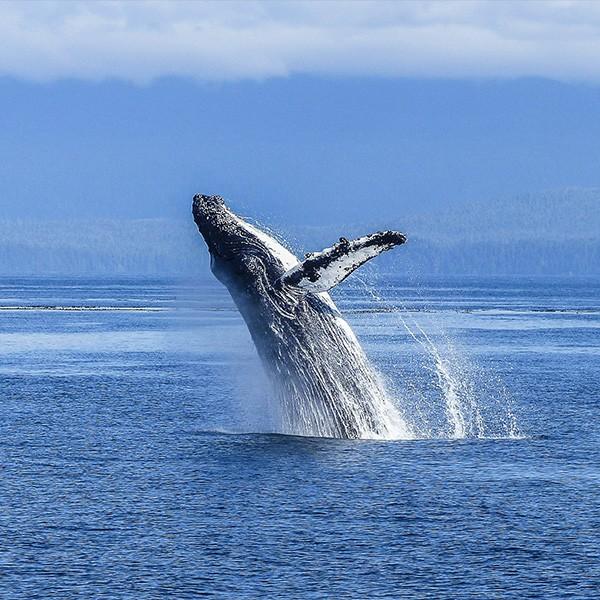 Ver ballenas en viaje a Canadá con niños