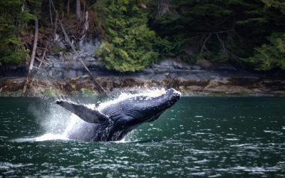 Canadá costa este y ballenas