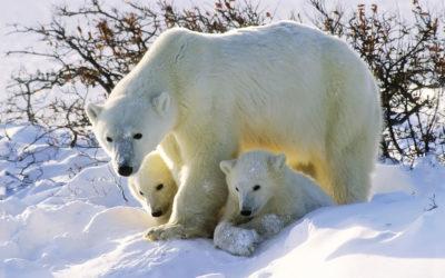 Viaje al Ártico