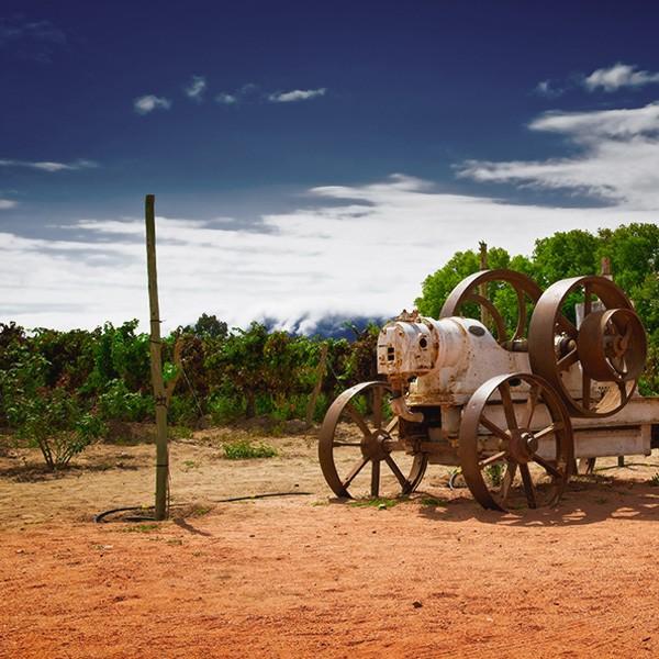 Viaje a bodega norte argentino Cafayate Saltaç