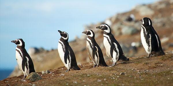 Observación de fauna en Argentina: ver ballenas y pingüinos