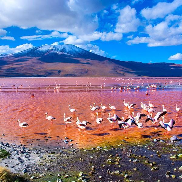 Laguna colorada en Bolivia después del paso fronterizo con Chile