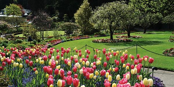 Visita a Butchard Gardens en Victoria en viaje a Canadá