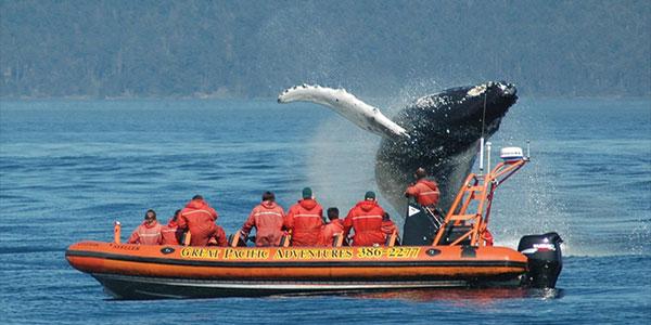 Excursión de avistamiento de ballenas en Victoria, Canadá oeste