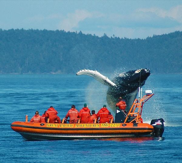 Viaje de aventura en Canadá con avistamiento de ballenas en Victoria