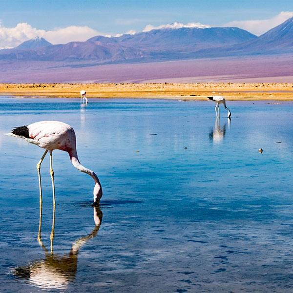 Reserva Nacional Los Flamencos en Atacama, Chile