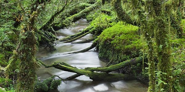 Excursión al Bosque Encantado en el Parque Nacional Queulat en Chile