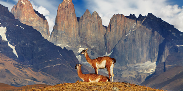 Extensión a Torres del Paine