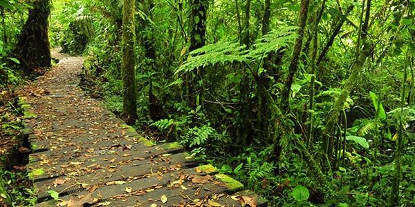 Ruta por la Reserva del bosque nuboso de Monteverde