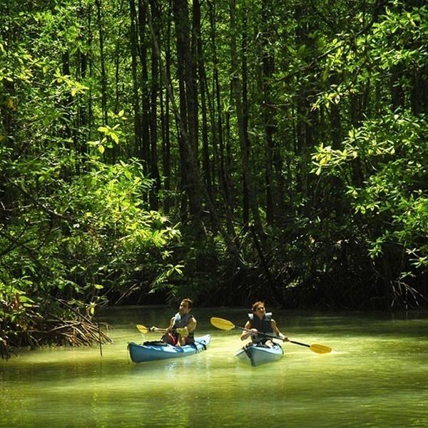 Kayak en el manglar Isla Damas
