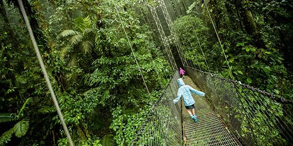 Recorrido por los puentes colgantes sobre el bosque de Arenal, Costa Rica