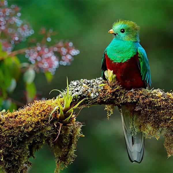 San Gerardo de Dota, ruta de observación de quetzales