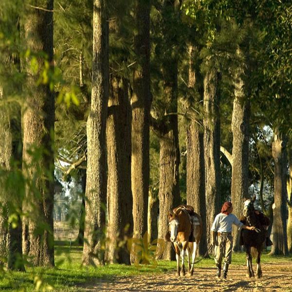 Estancia de lujo en Argentina La Bamba