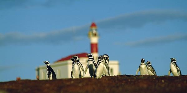 Visita a la colonia de pingüinos de Isla Magdalena