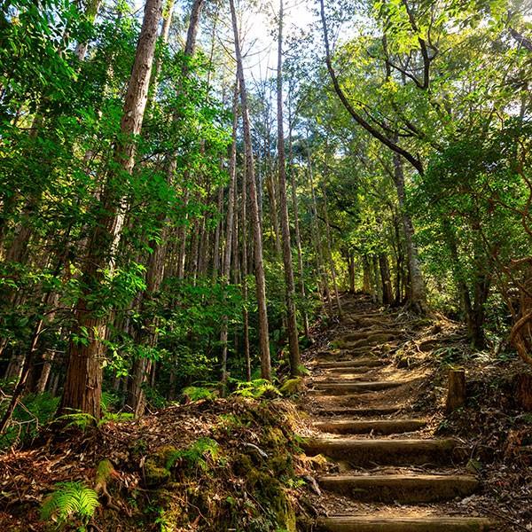 Camino de Kumano, ruta kumano kodo
