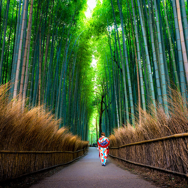 Bosque de Bambú de Kioto, Japón
