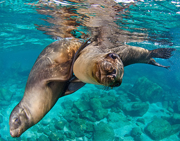 Leones marinos en Baja California