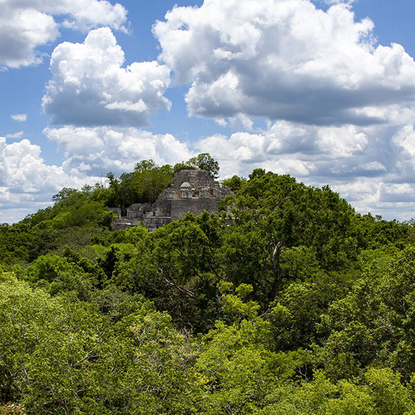Reserva de la Biosfera de Calakmul, selva alta de la península de Yucatán