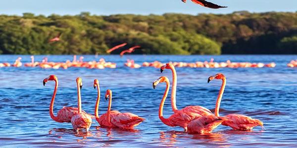 Parque Nacional de Celestún, Yucatán, México