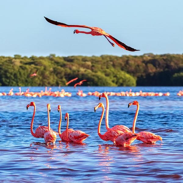 Parque Nacional de Celestún, parada en el viaje a México con niños