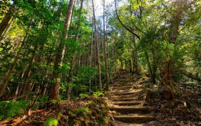 El Camino de Kumano