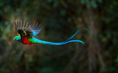 Fauna de Costa Rica en 4×4