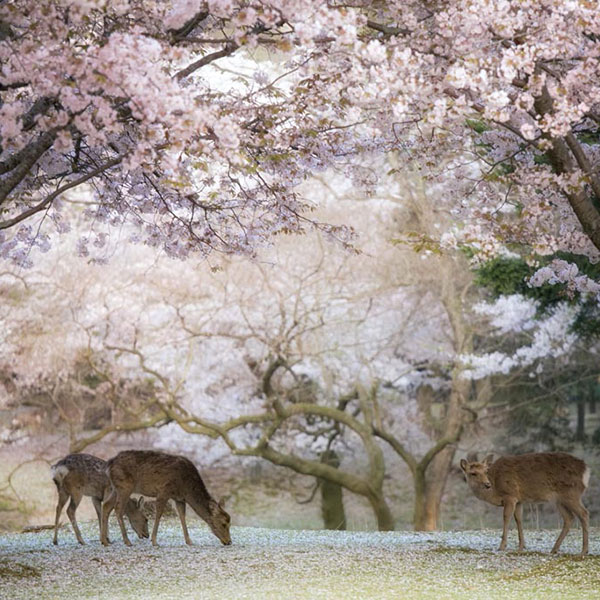 Nara, en ruta hacia Osaka con el Japan Rail Pass
