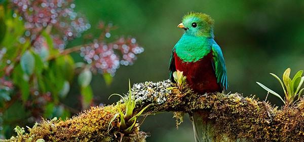 San Gerardo de Dota, hábitat del quetzal