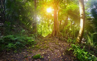 Trekking El Mirador y Tikal