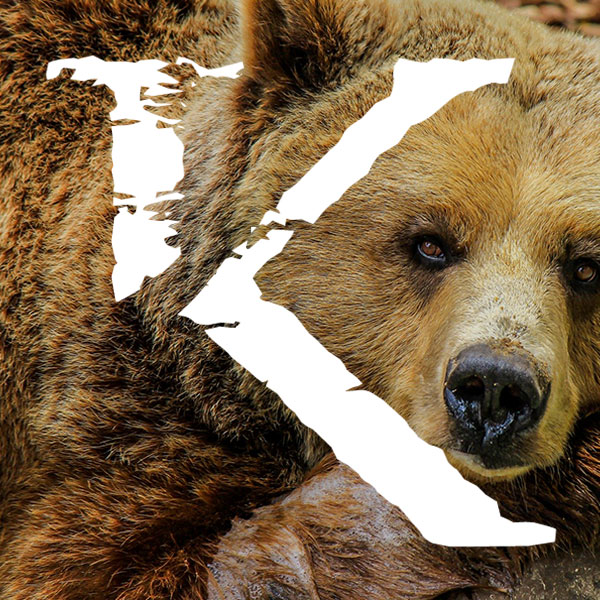 Viajes para ver osos en Canadá, KINSAI