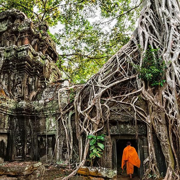 Templo de Ta Prohm, visita obligada en el viaje de novios a Camboya