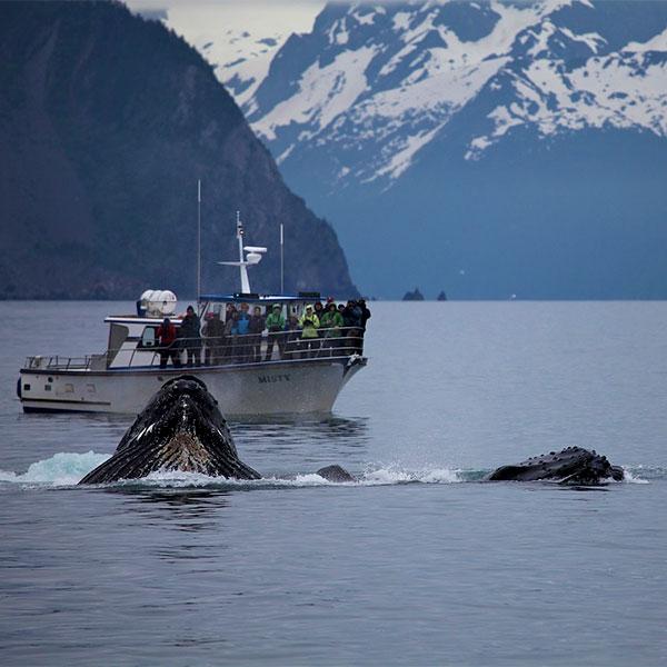 Crucero por el Parque Nacional Kenai en Alaska