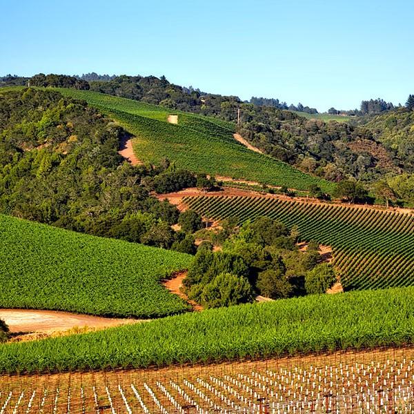 Viñedos en Valle de Napa, fly and drive California