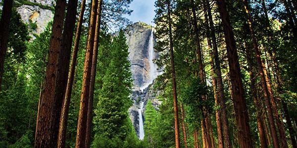 Sequoias en el Parque Nacional de Yosemite, costa oeste EEUU