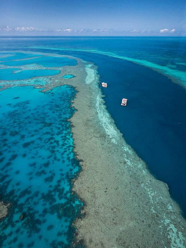 Crucero por la Gran Barrera de Coral en el Beach Club Hamilton Island