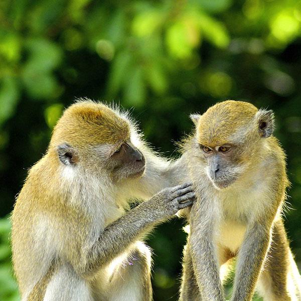 Selva en la Isla de Java y monos