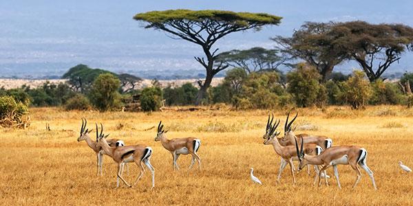 Parque Amboseli en Kenia