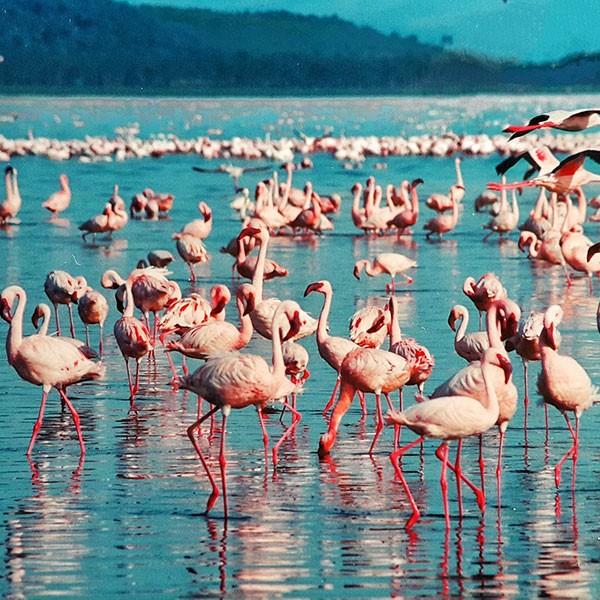 Safari todo incluido en Kenia Lago Nakuru