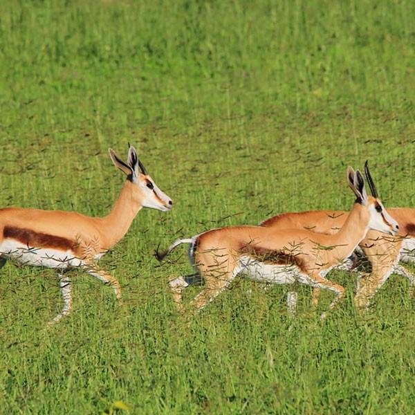Parque Nacional Aberdare en Kenia