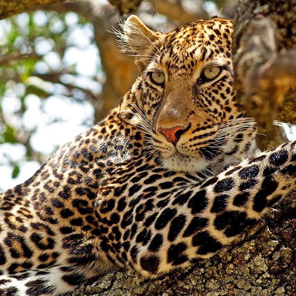 Safari fotográfico en Masai Mara