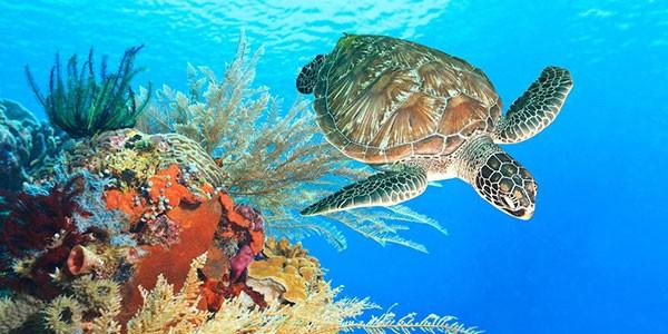 Viajes de buceo y snorkel a Maldivas