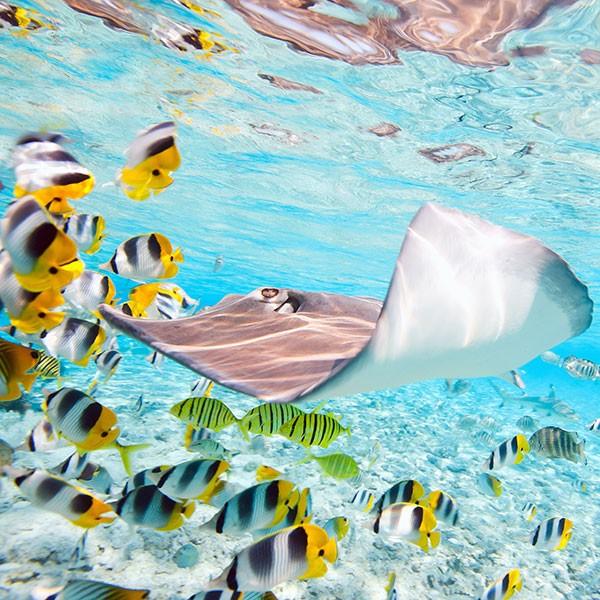 Buceo en Rangiroa Archipiélago Tuamotu Polinesia