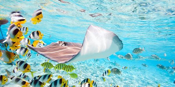 Viajes a Polinesia para practicar snorkel y buceo