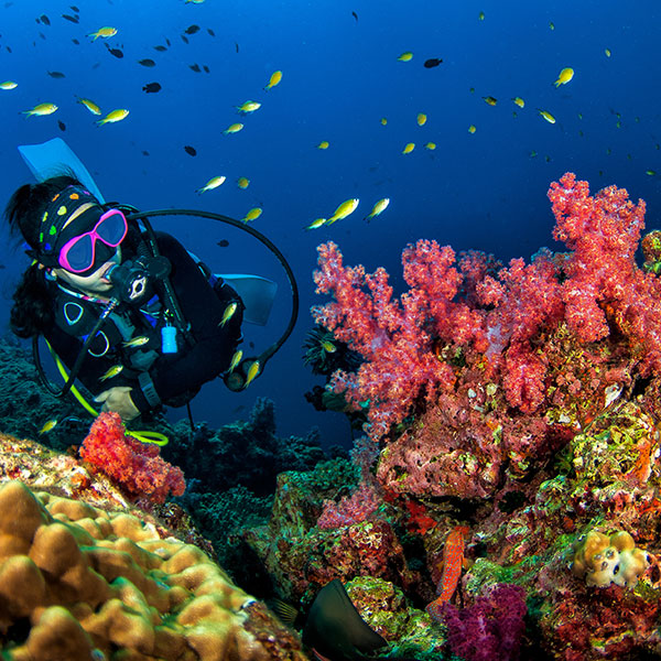 Buceo en arrecife de coral Koh Ngai isla de Tailandia