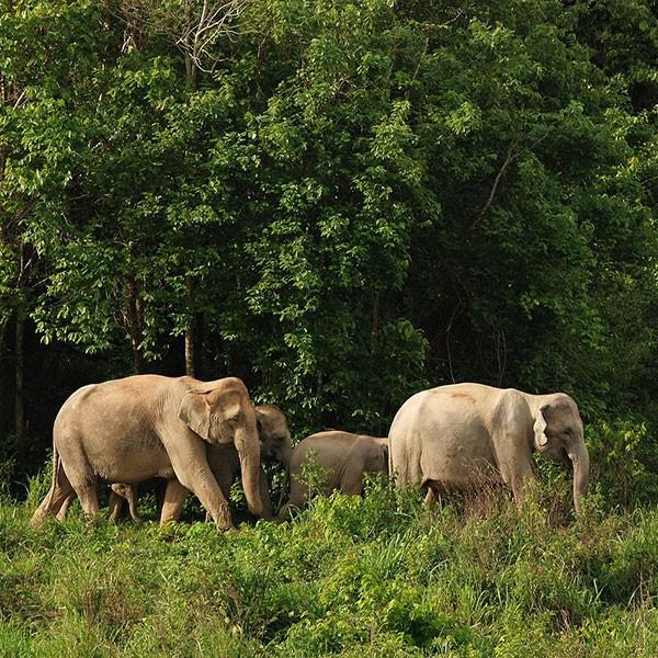 Centro ecoturismo de acogida de elefantes en Tailandia