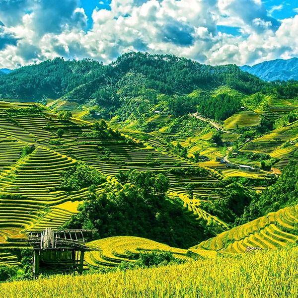 Terrazas de cultivo de arroz en Mai Chau