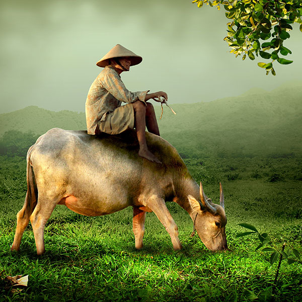 Pastor con búfalo, vietnam