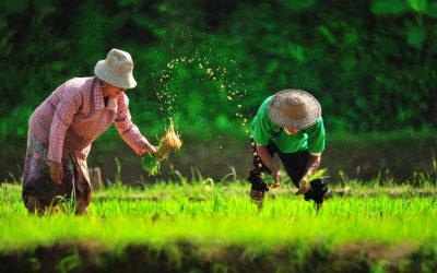 Ecoturismo y wellness en Tailandia